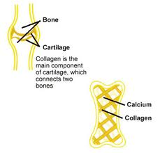 inspireyourlife_collagen bones