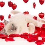 """Ασκήσεις Kegel: για να είσαι """"γάτα"""" τη βραδιά του Αγίου Βαλεντίνου!"""