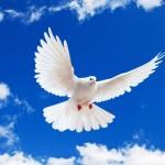 """Η συμβουλή της εβδομάδας: """"Για να σταματήσει ο """"πόλεμος έξω"""", κάνε """"ειρήνη μέσα σου"""""""