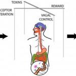 Μπορούν τα βακτήρια του εντέρου να ελέγξουν  το μυαλό μας;