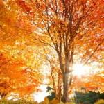 Σεπτέμβριος: Μια καινούργια εποχή