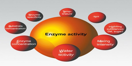 enzyme-picture