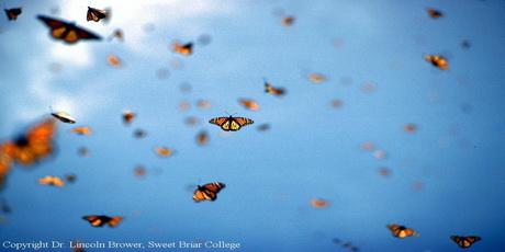 inspireyourlife_butterflies
