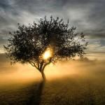 Ίρβιν Γιάλομ: Αυτό που είμαστε