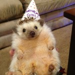 Eυτυχισμένα ζωάκια γιορτάζουν τα γενέθλια τους!