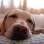 Ύπνος: Τα μυστικά του ανά τον κόσμο
