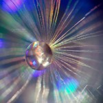 ΓΑΙΟΦΑΙΝΟΜΕΝΟ: Πέμπτη 26 Μαρτίου μας υποδέχεται στο Pure Bliss