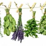 Μπαχαρικά και βότανα: Προστατεύουν από το ψηλό ζάχαρο, το διαβήτη και τη γήρανση
