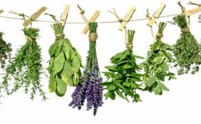 8 βότανα και τροφές που βοηθούν στην εξισορρόπηση των ορμονών στους άντρες
