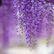 Spring-beautiful-nature