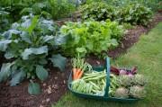 Vegetable-gardenartfire.com_