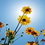 Οι «τροφές» της Ψυχής: Απλότητα, Συγχώρεση & Αγάπη