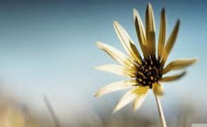 Μακροζωία: Πώς μπορείτε να προσθέσετε 14 χρόνια στη ζωή σας;