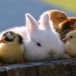 Επίδραση των ζώων στην ψυχολογία του ατόμου