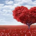 Πως μπορούμε να ενεργοποιήσουμε την αγάπη στο σπίτι μας και σε μας