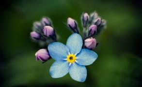 Το λουλούδι είναι