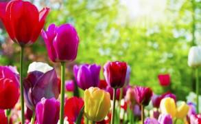 Μπορείς να κόψεις όλα τα λουλούδια…