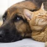 Άνθρωποι «Σκύλοι» και Άνθρωποι «Γάτες»