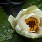 Osho: Η αγάπη είναι η μεγαλύτερη θεραπευτική δύναμη στον κόσμο