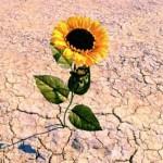 Ψυχική Ανθεκτικότητα και Στρατηγικές Διαχείρισης της Αλλαγής