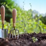 Φυτά και λαχανικά για καλλιέργεια στη σκιά
