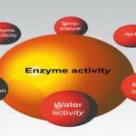 Ένζυμα: Το κλειδί για Υγεία & Μακροζωία