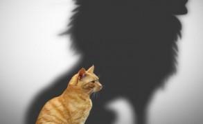 Η γενναιότητα διδάσκεται-Η αφοβία κατακτιέται