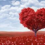 Αγάπη, Το Θεραπευτικό Βοτάνι της Ζωής