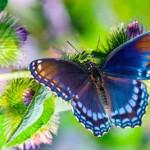 Ομορφιά και Πνευματικότητα